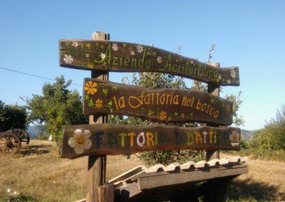 fattoria nel bosco (3)
